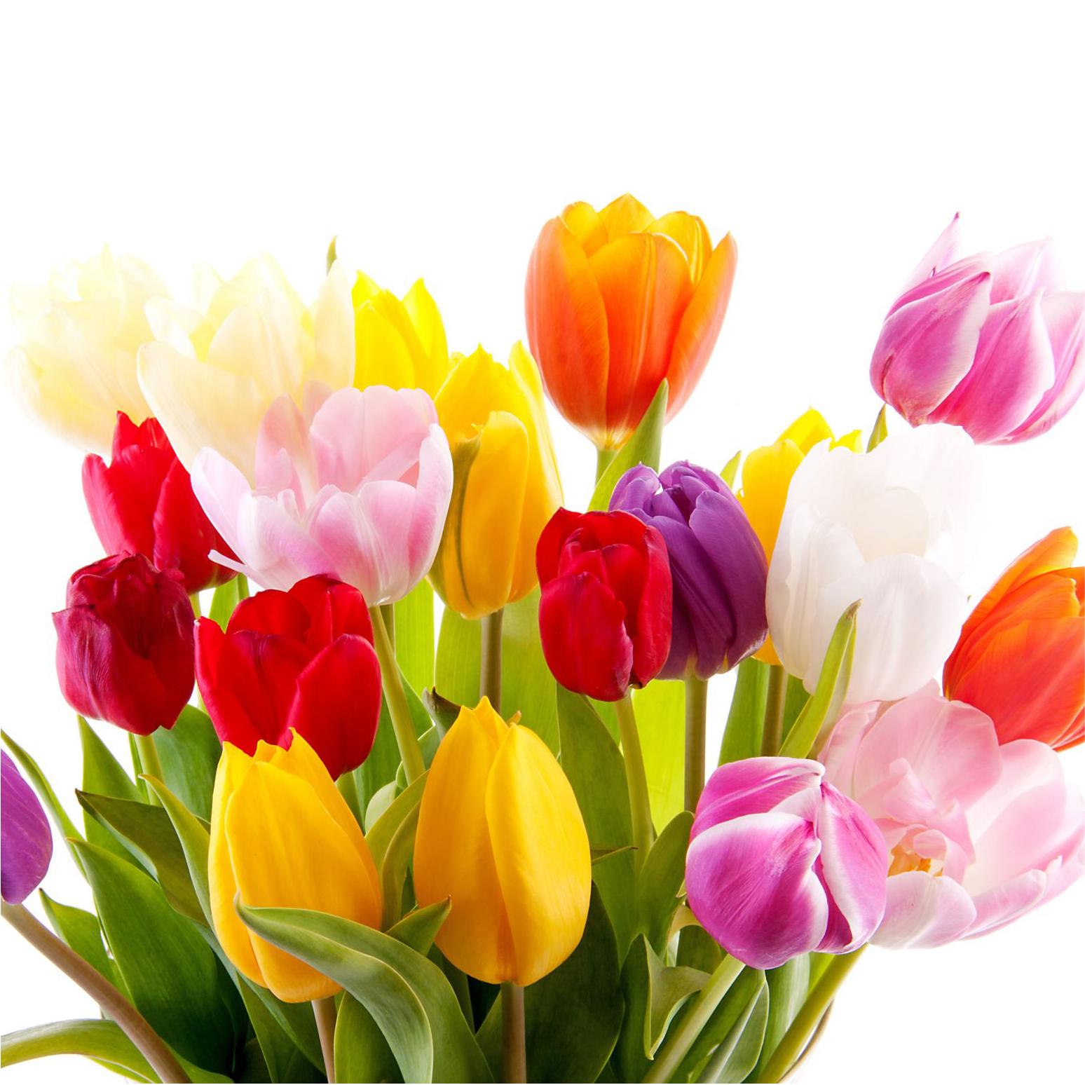Картинки тюльпанов на 8 марта